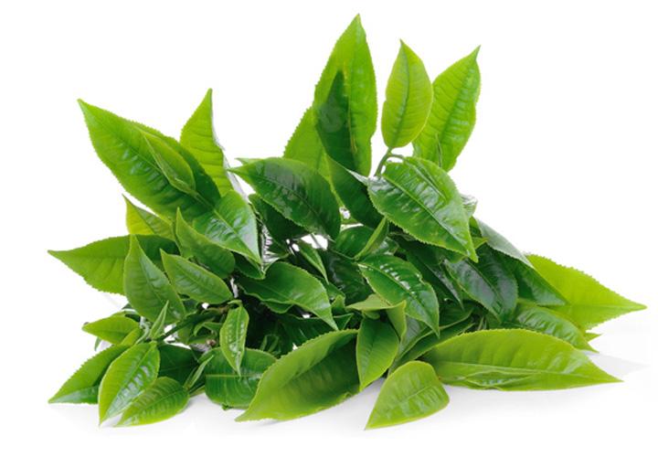 Hương trà xanh
